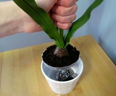 HIDING spots!! Lots of good examples---Potted Plant Secret Compartment