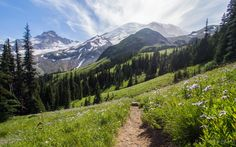 A walk on The Wonderland Trail in Mount Rainier National Park. It's appropriately named. [3500x2188][OC] : EarthPorn