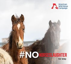 """The Bureau of Land Management's (BLM) has requested the 2018 budget lift the ban on destroying healthy mustangs and burros. If the ban is lifted, wild horses and burros in holding facilities will be killed or sold to laughter.The remaining """"excess"""" population will be slaughtered, possibly gunned-down in the wild. Up to 92,000 healthy horses will die.  The Congressional markup to decide if this slaughter provision is included will happen in the next two weeks.  We have two weeks to stop the…"""