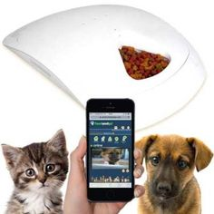 Never forget to feed your pet again.  remote feeding from your phone ap' See 5 top rated automatic pet feeders here at doorstepzoo.com