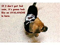 Colorado Avalanche dog (spawty)