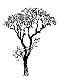 Free bare-tree Clipart - Free Clipart Graphics, Images and Photos. Silhouette Pictures, Flower Silhouette, Silhouette Clip Art, Tree Silhouette, Black Silhouette, Tree Stencil, Stencil Painting On Walls, Stencils, Tree Line Drawing