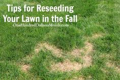 Tips for Reseeding Your Lawn in the Fall. Last spring, the HH and I reseeded our grass.  We chose to do it in the spring, because as you know, we were trying to sell our house and wanted to put our best foot forward.  The best time to reseed your lawn, though, is actually in the fall.  The...