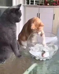 Cute Funny Animals, Cute Baby Animals, Animals And Pets, Cute Cats, Funny Cats, Humorous Cats, Nature Animals, Gato Gif, Cute Animal Videos
