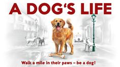 A DOG'S LIFE GAME – Be A Canine Hero! Family Board Games, Guinness World, Over The Moon, Go Fund Me, Dog Life, Pet Supplies, Dog Lovers, Pup, Hero