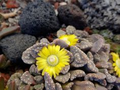 Succulents in the Cold - FineGardening