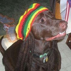 Bob Marley   Dog Halloween Costumes: 20 Funny, Homemade Dog Costumes You'll Love   Holidays   Disney #halloween Family.com