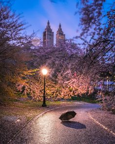 Central Park Spring artistic Cherry Blossoms Night time photo Time Photo, Cherry Blossoms, Buy Frames, Central Park, Night Time, New York City, Gallery Wall, Country Roads, Nyc