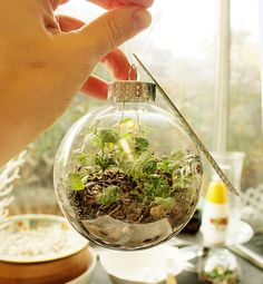 DIY Terrarium Ornament. I've got to try this. It'll go great with my larger table top terrariums.