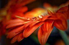 Drop. by Roberto Piva on 500px