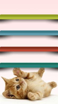 ネコの壁紙 | スマホ壁紙/iPhone待受画像ギャラリー