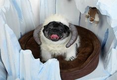 """Oh, no! Luke was caught by Wampug! 