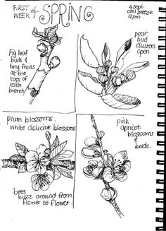 Nadene at Practical Pages shares some of her nature journal pages.