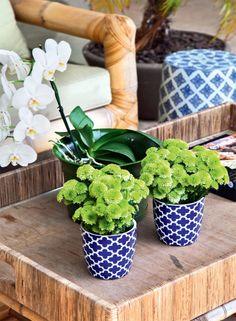 Na varanda, os vasos da Le Lis Blanc Casa têm estampa de inspiração marroquina.