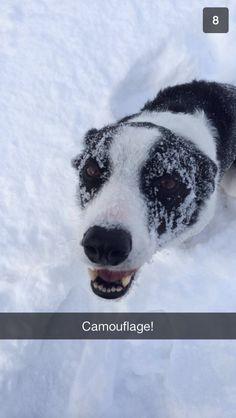 Silly Flynn having fun in the snow!