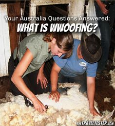 Your Australia Questions Answered – What Is WWoofing? | The Travel Tester | www.thetraveltester.com