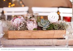 Succulent, protea and airplant centrepieces