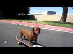 Skateboarding Critters!  Awesome video