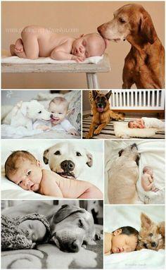 Собака друг младенца| Дети Фотосессия| Дети Развитие| Дети Идея| Домашние животные Фото