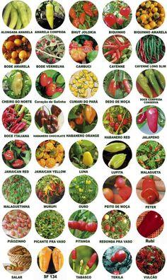 Kit 10 Variedades Sementes De Pimentas Rara Escolha Entre 40 - R$ 10,90 no MercadoLivre