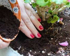 le marc de café renforce les plantes qui aiment les sols acides