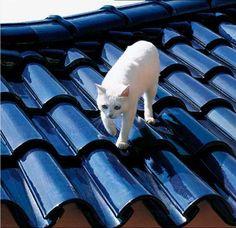 Tejas Borja Glazed Cobalt Blu Decocurvas Roof Tiles #kitten #rooftop.LOVE these cobalt tiles.