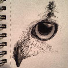 Sketch by Kayleigh foley - owl eye - November 2013
