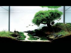 fresh water planted aquarium, the fish become the birds!