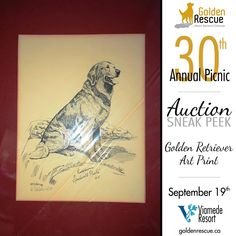 Golden Retriever Art, Chance 3, Auction Bid, 30th Anniversary, Rescue Dogs, Picnic, Plastic, Art Prints, Facebook