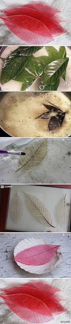 Transparent leaves. Acqua e bicarbonato di sodio. Far bollire fino a quando le foglie non diventano trasparenti.