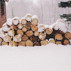 Stocking up for fire wood as we come into Winter!