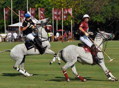 Polo Argentino