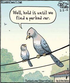 Funny Talking Birds | We'll hold it until we find a parked car! | Most likely it will be mine..
