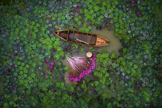 Ninfee, Vietnam