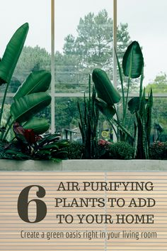 Freshen Up your Home with These 6 Houseplants that Purify Indoor Air Air purifying plants to add to Eco Friendly Water Bottles, Eco Friendly Cleaning Products, Green Living Tips, Love The Earth, Green Architecture, Eco Friendly House, Green Building, Building Facade, Building Design