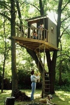 Kids treehouses