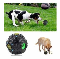 Put some of your pet\'s favorite snack inside and the dog will be attracted It\'s like a duck quacking when the ball is in movement, very funny. Easy for pet to carry. Great for small and medium sized dogs Best Dog Toys, Best Dogs, Medium Sized Dogs, Pet Life, Dog Supplies, Dog Treats, Dog Days, Your Pet, Dog Lovers