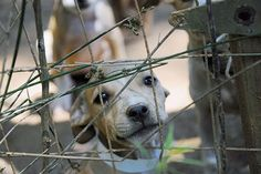 ASPCA Rescues 367 Dogs in Multi-State Dog Fighting Bust | ASPCA