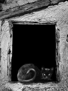lluvia artificial: consejos para hacer fotografias en blanco y negro