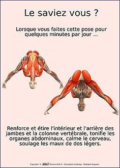 musculo-squelettiques des positions de yoga - N ° 3 Yoga Sequences, Yoga Poses, Fitness Del Yoga, Yoga Muscles, Yoga Pictures, Yoga Block, Yoga Positions, Relaxing Yoga, Iyengar Yoga