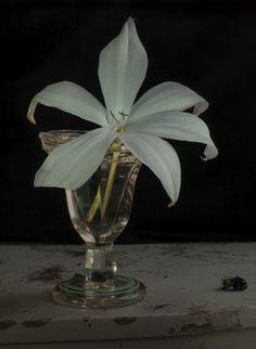 fiona pardington photography - Google Search