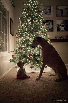 Samen voor de #kerstboom