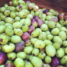 In casa #ricettelastminute è iniziata la raccolta delle #olive ... ☺️ #buonpomeriggio a tutti!! #love #food #instafood #instagood #instaphoto #photooftheday #olio #italy #italia #sicilia #sicily #catania  #me