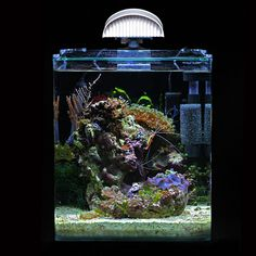 Flickr Nano Aquarium, Marine Aquarium, Aquarium Fish, Saltwater Tank, Saltwater Aquarium, Salt And Water, Fresh Water, Chameleons, Fish Tanks