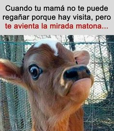 Funny Spanish Memes, Spanish Humor, Stupid Funny Memes, Haha Funny, Funny Animal Pictures, Funny Images, Funny Animals, Photo Chat, Best Memes