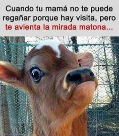 Funny Spanish Memes, Spanish Humor, Animal Memes, Funny Animals, Cute Animals, Funny Images, Funny Pictures, Wallpaper Animes, Photo Chat