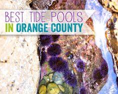 Best Tide Pools in Orange County