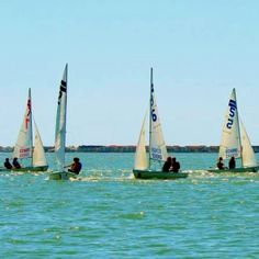 Eckerd College Students learning to sail in St Pete, Florida. They have a boathouse on campus! Eckerd College, College Ready, College Students, What's The Number, Sailing Adventures, Boathouse, Home And Away, Student Learning, Colleges