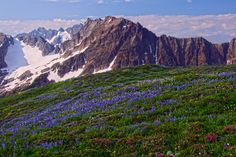 wildflowers wallpaper | Wildflowers on Sahale Arm 6 North Cascades National Park