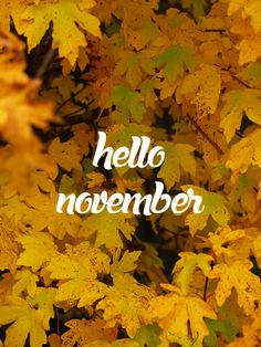 Hello November - ®www.image-gratuite.com November Tumblr, November Images, November Pictures, November Quotes, Wallpaper Free, Calendar Wallpaper, Fall Wallpaper, Neuer Monat, New Month Wishes